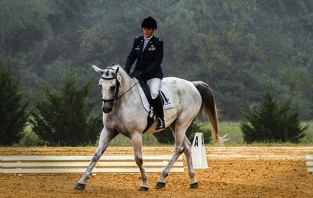 Ausstattung und Reitzubehör für das erste eigene Pferd
