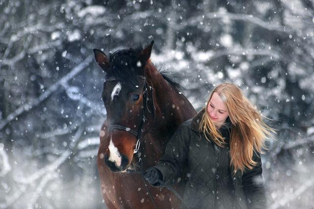 Pferdepflege im Winter