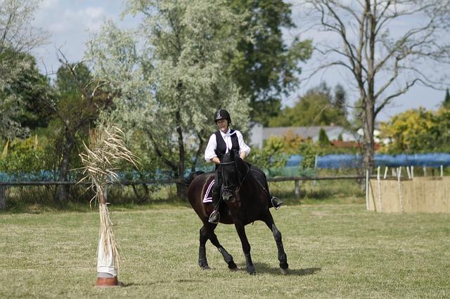 Was gehört zur Pferde-Grundausstattung?